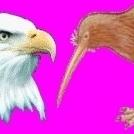 Eagle_Kiwi